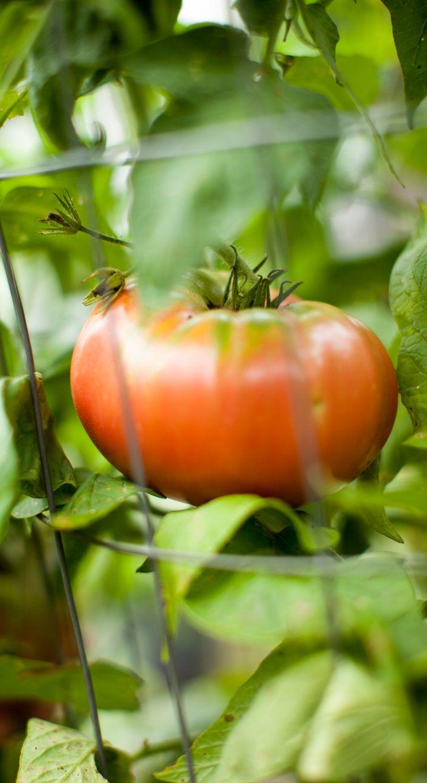 good produce